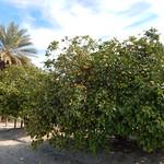 flip flash coachella greenscreens thumbnail