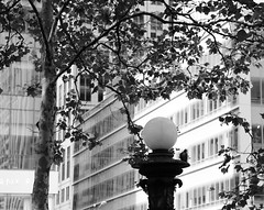 Bryant Park Tree, Lamppost, and Pigeon (cynTEAa) Tags: nyc bryantpark monochrome