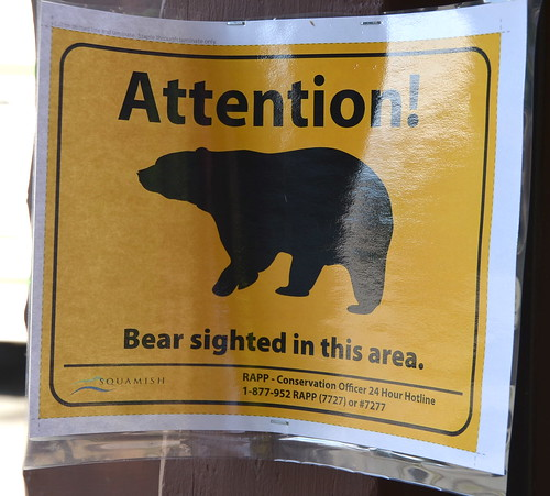 Attention! Bear sighted in this area.