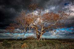 A bit dramatic (Chas56) Tags: ngc tree landscape clouds sky victoria australia canon canon5dmkiii light drama dramatic craigieburn craigieburngrasslands grasslands paddock