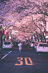 Yaesu Sakura Dori - Tokyo, Japan (inefekt69) Tags: japan tokyo nihonbashi sakura dori street cherry blossoms flowers nature spring hanami nikon d5500 日本 東京 さくら 桜 花見 tree road people yaesu 八重洲さくら通り 日本橋 tumblr