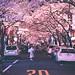 Yaesu Sakura Dori - Tokyo, Japan