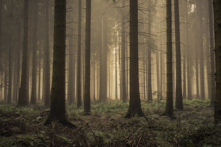 forest series #104