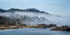 Foggy Day at Pt. Lobos (Ron Rothbart) Tags: california pacificocean pointlobos ptlobos coast fog ocean rocks trees water waterfront