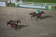 Se le piantó el jinete.... (Adrit fotografías) Tags: granpremiopolladepotrillosypolladepotrancas caballos carreras carrerasdecaballos caballosargentinos argentina buenosaires hipódromoargentinodepalermo horses