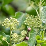 close up greens thumbnail