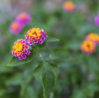 Blume | Flower