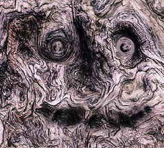 Old Tree (joncutrer) Tags: edited tree trunk bark face halloween eyes mouth spooky forest hdr cypress enchanted magical weird strange odd