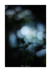 2018/8/18 - 3/3 END. photo by shin ikegami. - SONY ILCE‑7M2 / 七工匠  7artisans 50mm f1.1 (shin ikegami) Tags: silhouette シルエット sky 空 マクロ macro 明治神宮 原宿 代々木 summer 夏 asia sony ilce7m2 sonyilce7m2 a7ii 50mm 七工匠 7artisans 7artisans50mmf11 tokyo photo photographer 単焦点 iso800 ndfilter light shadow 自然 nature 玉ボケ bokeh depthoffield naturephotography art photography japan earth