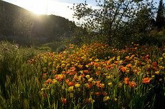 0304_NWS_SBS-L-WILDFLOWERS-6-JV (johnvalenzuelaphotography) Tags: riverside ca
