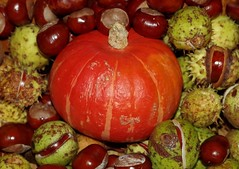 horse shestnuts and pumpkin squash display  autumn (Simon Dell Photography) Tags: horse chestnuts conkers autumn fall winter display scene colors nuts seeds lots
