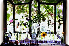 SEPTEMBER ON THE WINDOWSILL IN THE KITCHEN || SEPTEMBER OP DE VENSTERBANK IN DE KEUKEN (Anne-Miek Bibbe) Tags: september settembre septembre septiembre setembro herfst autumn outono herbst automne otoño bloei bloemen flowers flor flores bloom blumen fleur fleurs fiori fioritura vensterbank windowsill keuken kitchen sliderssunday happysliderssunday canoneos700d canoneosrebelt5idslr annemiekbibbe bibbe nederland 2018
