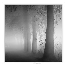 morning light (paolo paccagnella) Tags: phpph© trees street foto fog way bn bw best blackandwhite ass activity territorio ambiente flickr monochrome minimalism white eos landscape
