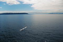 014 (RD1630) Tags: seattle sea water meer usa washington state seagull möwe pier 70 landscape landschaft outside outdoor animal tier