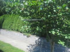 IMG_8349 (Andy E. Nystrom) Tags: bellevue washington wa bellevuewashington