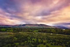 Ireland2017Day3-1009 (Sweetleavins) Tags: ireland green