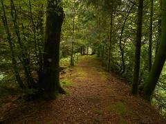 DSCN5579 (norwin_galdiar) Tags: bretagne brittany breizh finistere monts darrée nature landscape paysage