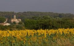 Milhaud été 2018, le plein de soleil - IMG_6153 (6franc6) Tags: eìglise fleur jaune tournesol occitanie languedoc gard 30 milhaud juillet 2018 6franc6 vélo kalkoff vae église