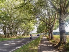 Landstraße - Urdenbacher Weg (KL57Foto) Tags: 2018 august blüten düsseldorf düsseldorfurdenbach germany kl57foto landschaft nrw natur nordrheinwestfalen olympus penemp2 urdenbach landstrase urdenbacher weg