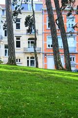 (Liane FKL) Tags: urban urbain street rue tree arbre nature city ville bruxelles brussels green vert grass pelouse herbe arbres trees troncs trunks façades fasad