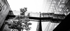 Berlin, July 19, 2018 (Ulf Bodin) Tags: berlin blackandwhite summer monochrome tree reflections tyskland canonef35mmf14liiusm canoneos5dsr architecture outdoor panorama dorotheenstrase germany urbanlife de lines sky