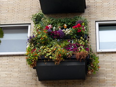 My home is my castle. (remember moments) Tags: dietmarvollmer myhomeismycastle balcony cologne köln grünerdaumen balkon