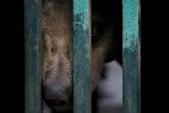Safe at last (leewoods106) Tags: wfft thailand sunbear animal wildanimal rehabilitation rehabilitationcentre