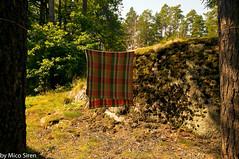 Carpet (Mico Siren) Tags: carpet nikond300s nikkor forest