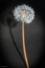 Bouquet d'étoiles (☆ Christian ...) Tags: sanvigneslesmines saôneetloire france fr