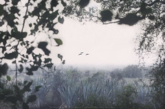 Nouvelle Zélande ~ Road-trip 2017 (Marie l'Amuse) Tags: nikon paysage landscape new zealand nouvelle zélande nature wild sauvage d7200 montagne mountain matin morning aube sunrise automne autumn bleu blue quiet calme calm vacances holidays road trip alone seul me vintage mountainscape nikkor soleil southland fiordland te anau milford sound eau water fiord fjord fiorland southern island mirror lakes lake bird oiseau oie canard arbre tree