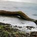 Log in Water Long Exposure