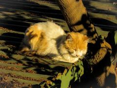 Gato dormindo (thiagodiasbsb) Tags: gato descansando dormindo repousando aquecendo sol cerro san cristobal chile santiago sleep cat felino sun morro região metropolitana telhado no