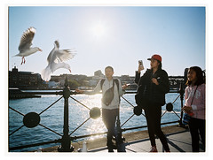 Seagulls ii (@fotodudenz) Tags: fuji fujifilm ga645w ga645wi medium format point and shoot film rangefinder 28mm 45mm 2018 120 sydney nsw new south wales australia circular quay harbour kodak portra 400 street photography tourists seagulls