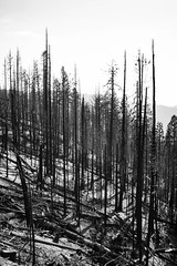 Scars of the Ferguson Fire