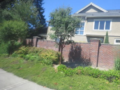 IMG_8331 (Andy E. Nystrom) Tags: bellevue washington wa bellevuewashington