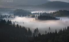Silk (Zoltán Győri) Tags: győrizoltán zoltangyori mist fog pines mountain morning sunrise
