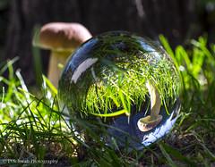 when the light touches - Crystal ball (schda22) Tags: crystalball crystal ball glaskugel mushroom pilz licht light fun bokeh schärfe tiefenschärfe wald wood