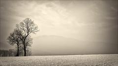 *** (witoldp) Tags: beskidy beskid kotlina żywiecka żywiecki poland landscape winter tree