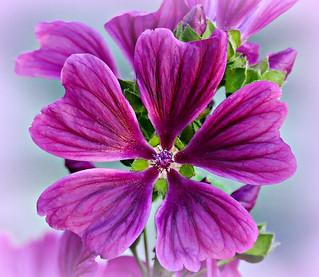 A June Bloom