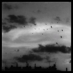 Over the city (PattyK.) Tags: ioannina giannena giannina mycity whereilive lovelycity skyline birds sky clouds monochrome blackadwhite ιωάννινα γιάννενα ηπόλημου πουλιά ήπειροσ ελλάδα βαλκάνια epirus ipiros greece grecia griechenland snapseed nikond3100 άσπροκαιμαύρο urban urbansky σύννεφα ουρανόσ καλοκαίρι summer august 2018