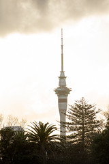 Whoop there it is (imajane) Tags: 2018 auckland janemonaghan newzealand 20180720museum8234 silhouette trees skytower