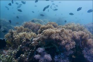 Philippines underwater view 1