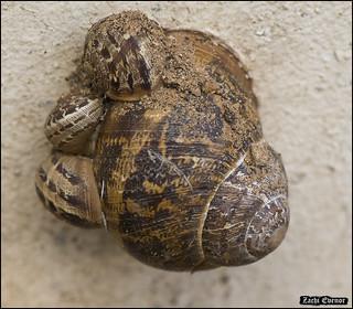 Macro-Snails-Aug-2018-IZE-040