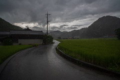 Large drops of rain. (Yasuyuki Oomagari) Tags: countryside country curve curved rural mountain rain pole telegraphpole green summer nikon d850 zeiss distagont2821 japan kyushu kumamoto 日本 lsndscape 九州 熊本県 雨 風景写真 道