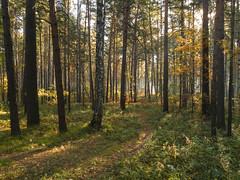 IMG_20180919_093503 (alexey.turkov) Tags: huaweip9 huawei forest autumn sun sunlight