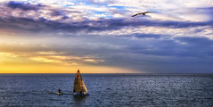 freedom is the oxygen of the soul (Bec .) Tags: bec canon 80d 18135mm largsbay adelaide southaustralia windsurfing surfing fun silhouettes bird seagull laridae water ocean sea freedomisoxygentothesoul