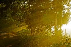 7:07am, winter fog (Fat Burns ☮ (gone bush)) Tags: landscape oxleycreekcommon sunrays raysofsun sun morningsun fog