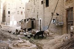 Backyard with goats and chicken (motohakone) Tags: jemen yemen arabia arabien dia slide digitalisiert digitized 1992 westasien westernasia ٱلْيَمَن alyaman