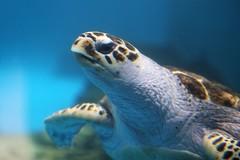 2018.08.17 Urlaub Mallorca (508b) Palma Aquarium (klemenshorst) Tags: mallorca delfin meer urlaub hai palma cala ratjada es caregador capdepera