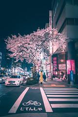 Chuo Sakura - Tokyo, Japan (inefekt69) Tags: japan tokyo sakura cherry blossoms flowers nature spring hanami nikon d5500 日本 東京 さくら 桜 花見 night neon crosswalk chuo 中央 tumblr